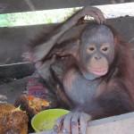 Natai Panjang (22-01-2012) (1) (2)