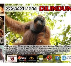 We created this billboard in honor of Orangutan Caring Week 2014.