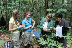 Dr. Cheryl Knott and research staff identify a botanical sample collected during an orangutan follow.