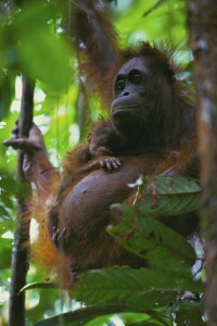 Marissa and her newborn infant, Walimah, in November 1998. First appearing in National Geographic magazine, October, 2003.