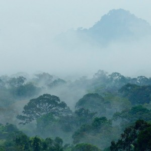 """The mountainous habitats in Gunung Palung National Park may someday serve as """"refugia"""" for orangutans whose primary habitat has been lost due to climate change. Photo © Tim Laman."""