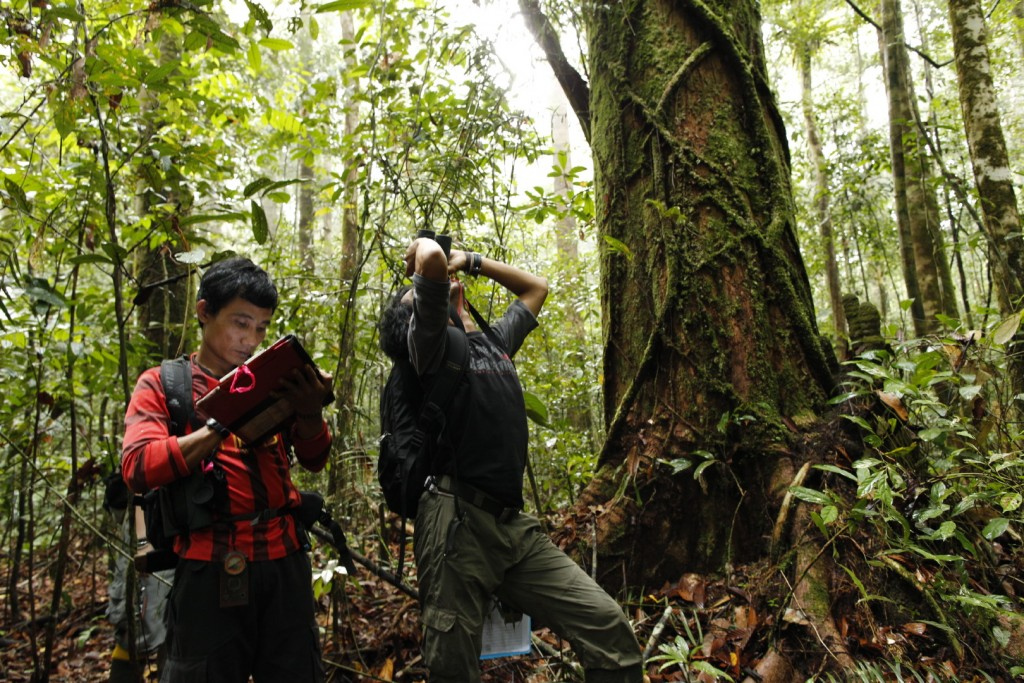 Field assistants, Toto and Agus, take orangutan behavioral data at Cabang Panti Research Site. In addition to constantly collecting data, the <a href=