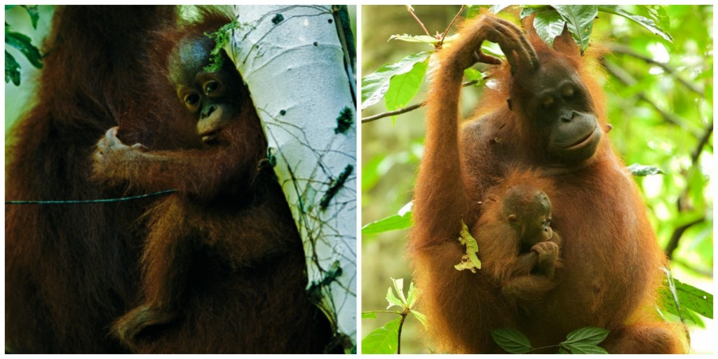Walimah as a baby in 1999 (left), and as a new mother in 2015 (right). How time flies!