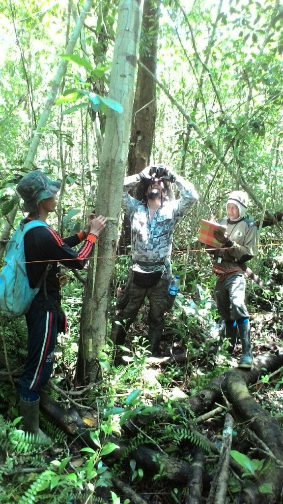 Edward Tang and a team from Nipah Kuning village collect tree diversity data from one of 10 total transects surveyed as part of the rapid survey in the Paduan River community forest area.